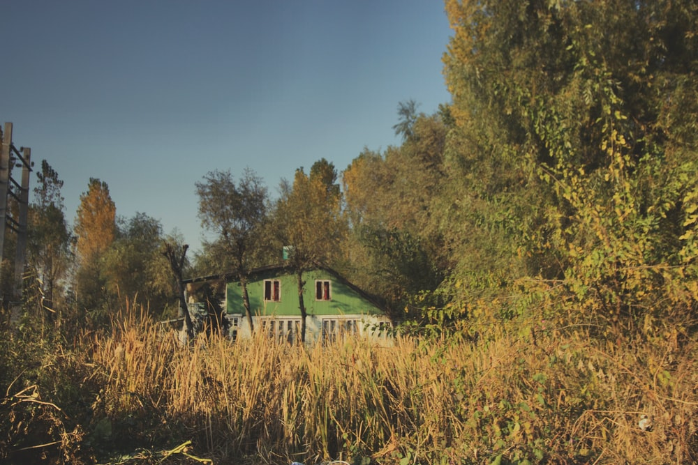 green bungalow surrounded by corn fields