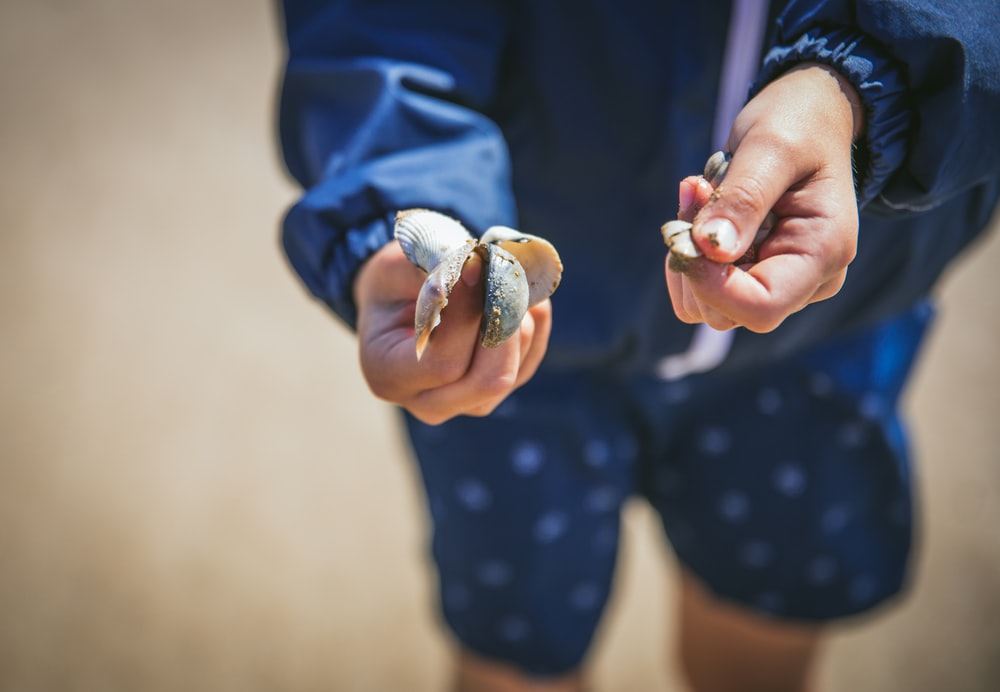 person holding seashells