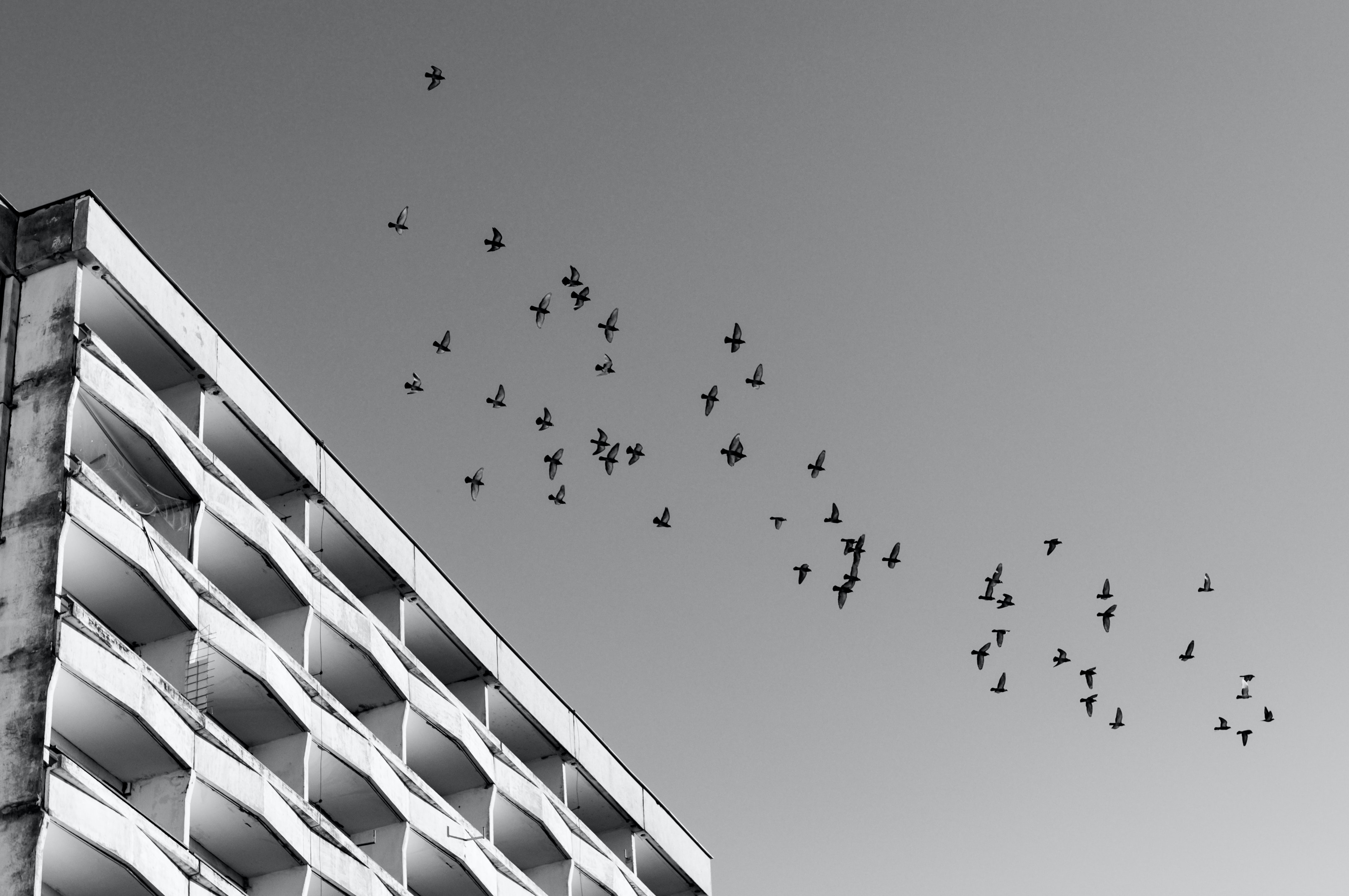 low-angle and grayscale photography of birds flying over building