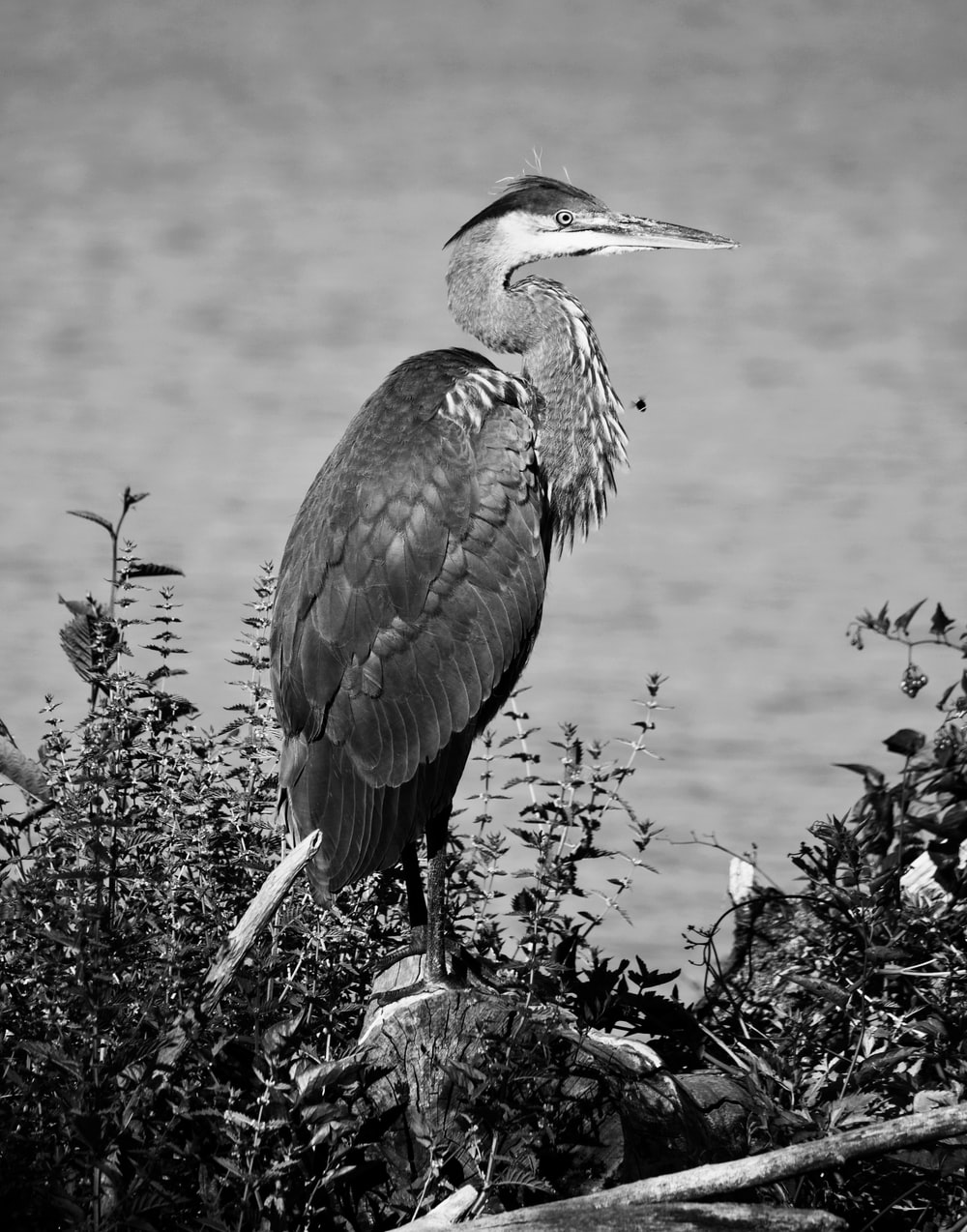 grayscale photo of long-beaked bird perched on rock