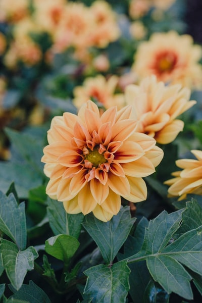 selective focus photograph of yellow petaled flower