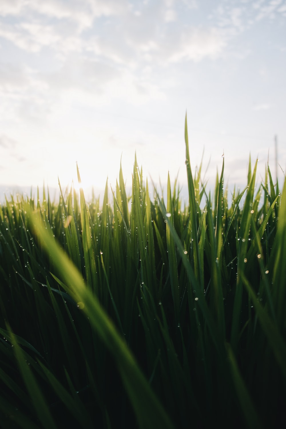 low angle photo of green grass field under cloudy sky at daytime