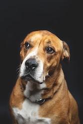「犬も歩けば棒に当たる」の正しい使い方は?英語や例文までわかりやすく紹介!