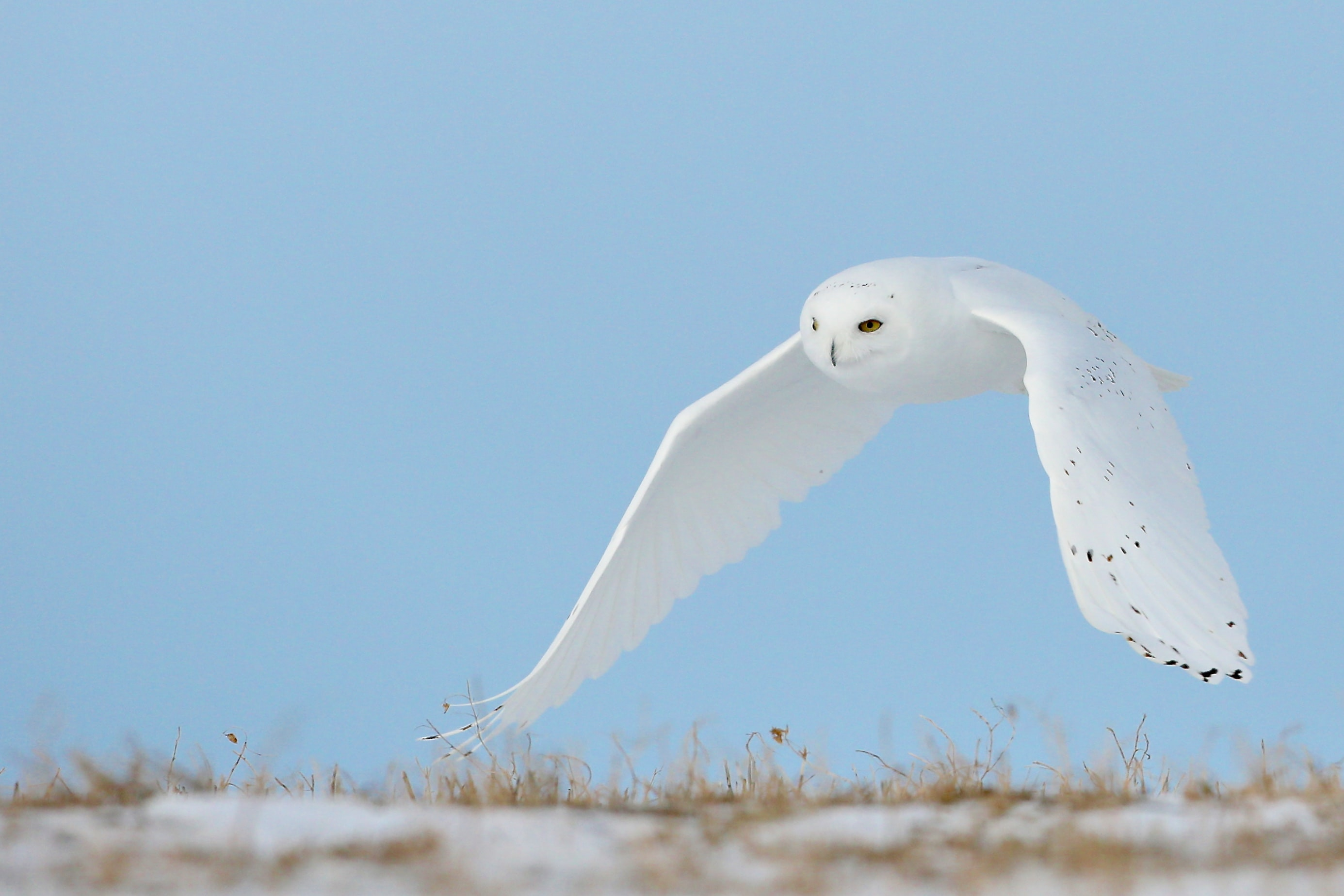 selective focus photo of white owl during daytime