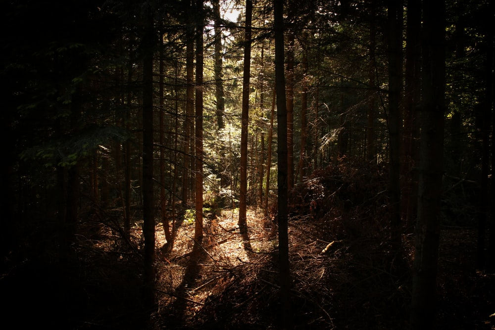 forest with sun light