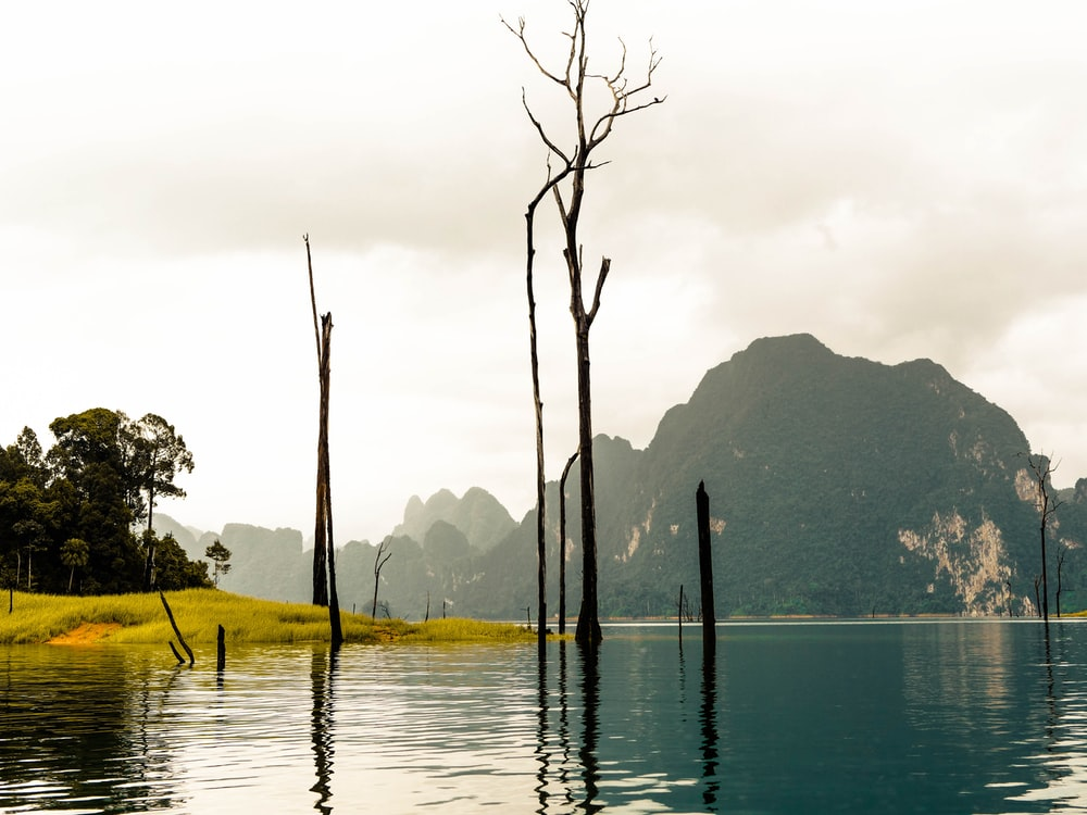 brown tree trunks surrounded with body of water with view of green mountains photo