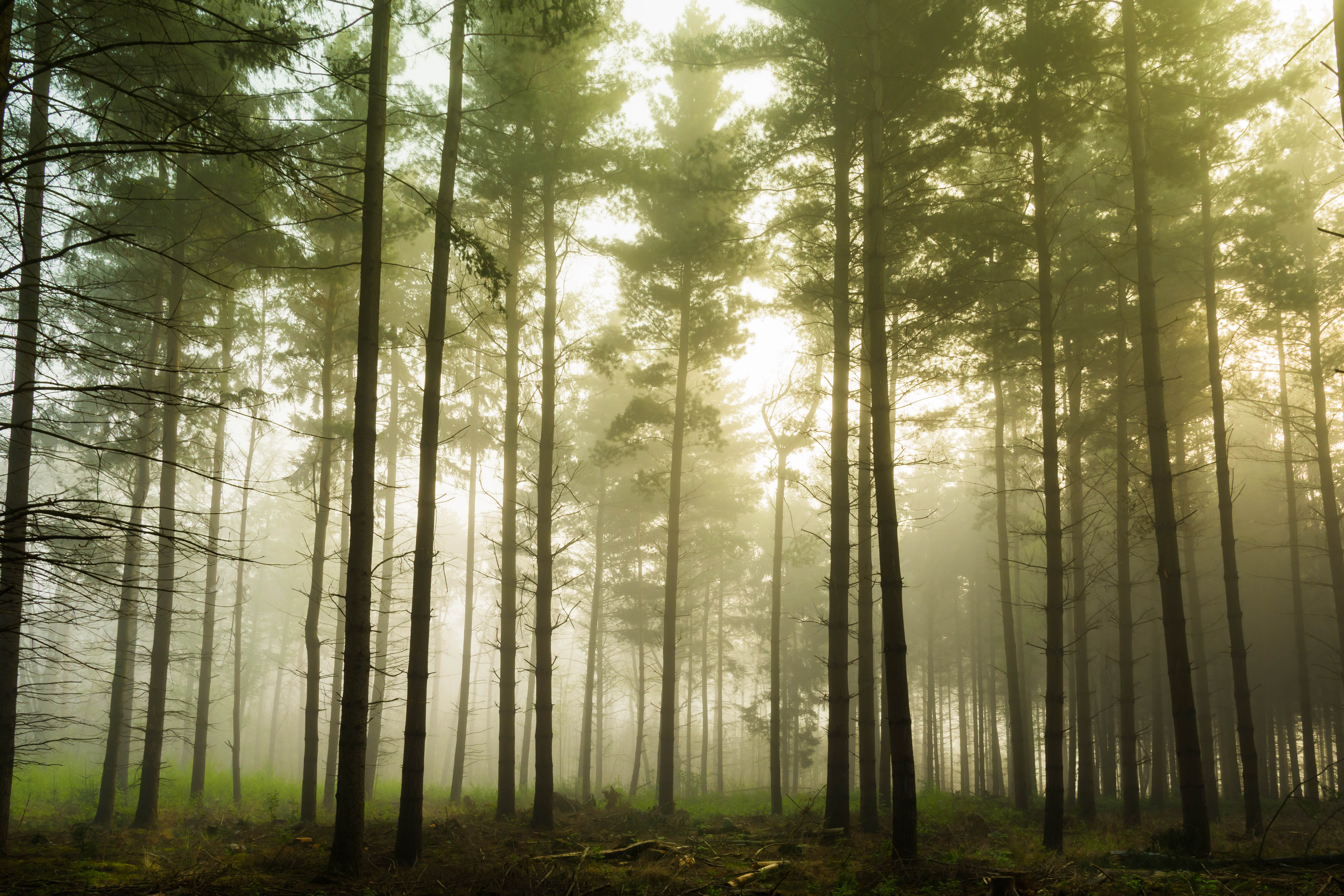 Green Trees On Foggy Forest