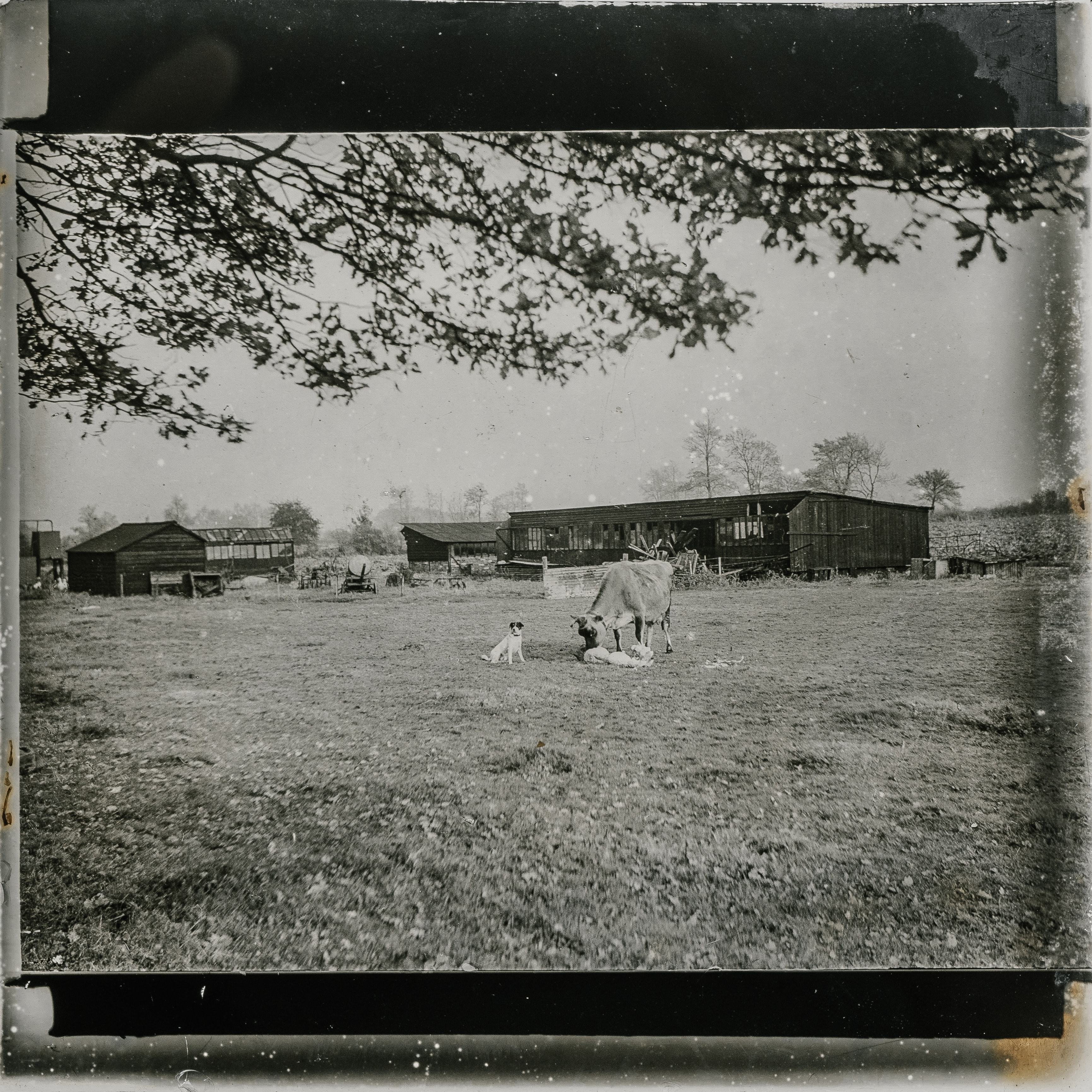 grayscale photo of horse on the field