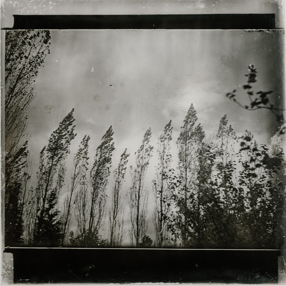 grayscale photos of trees painting