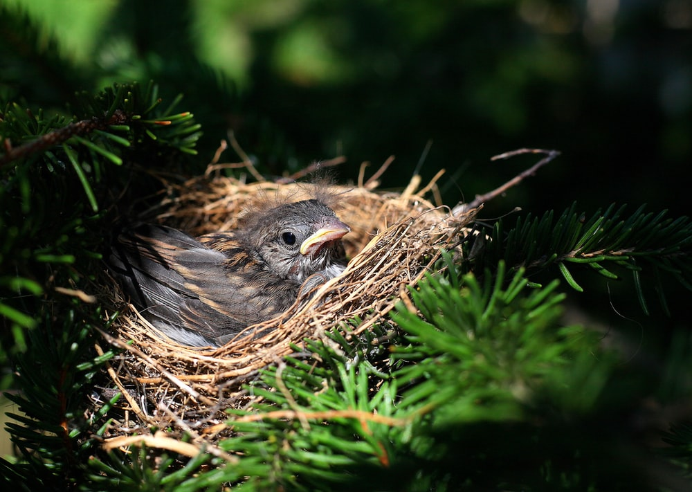 selective focus photography of black bird on birds nest