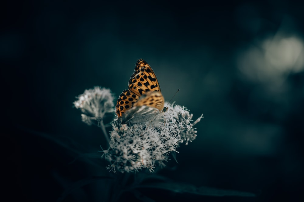 brown and black butterfly perched on white flower in selective focus photography