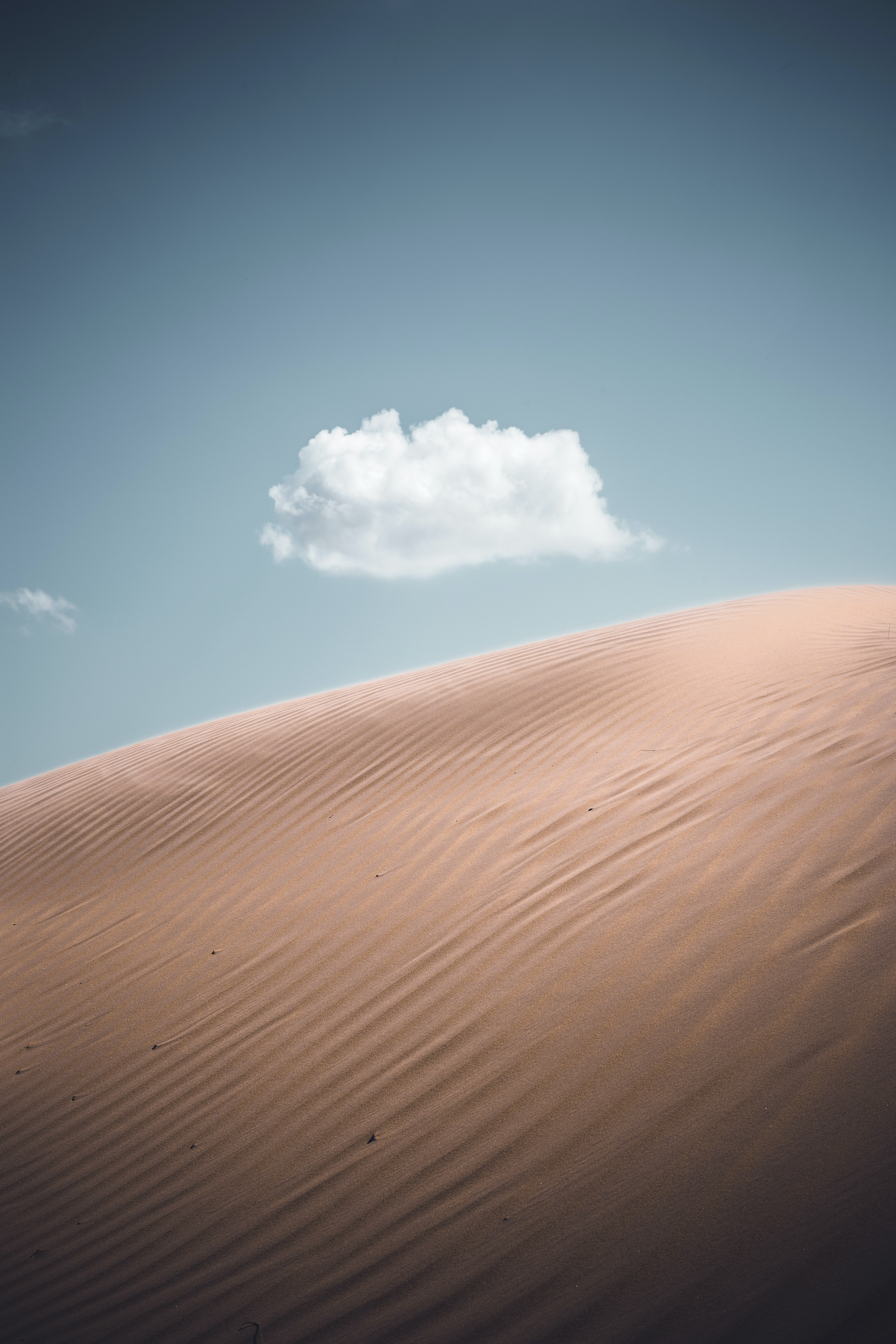 closeup photo of desert