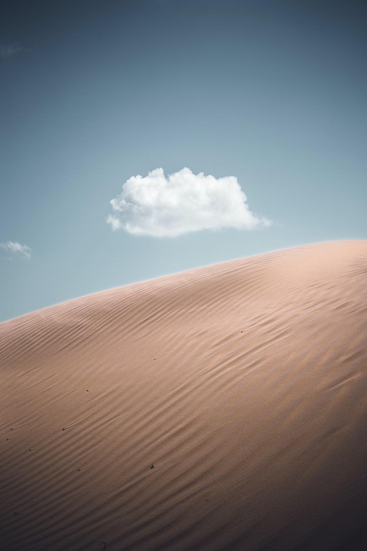 closeup photo of desert