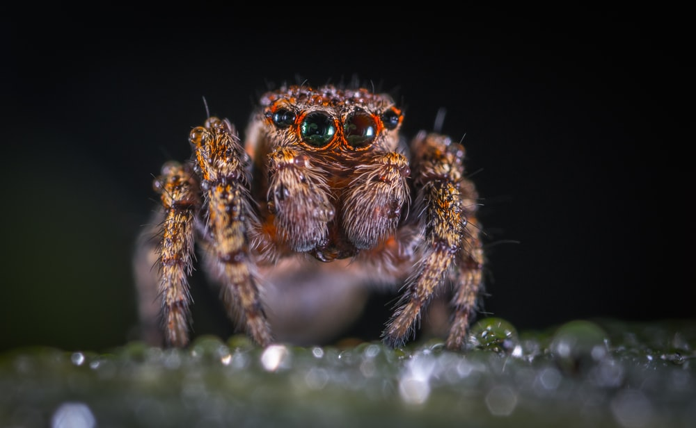 macro shoot photography of brown spider