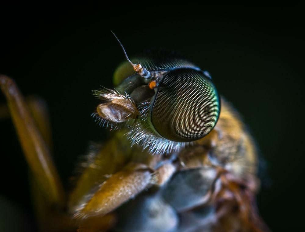 macro shot photography of yellow insect