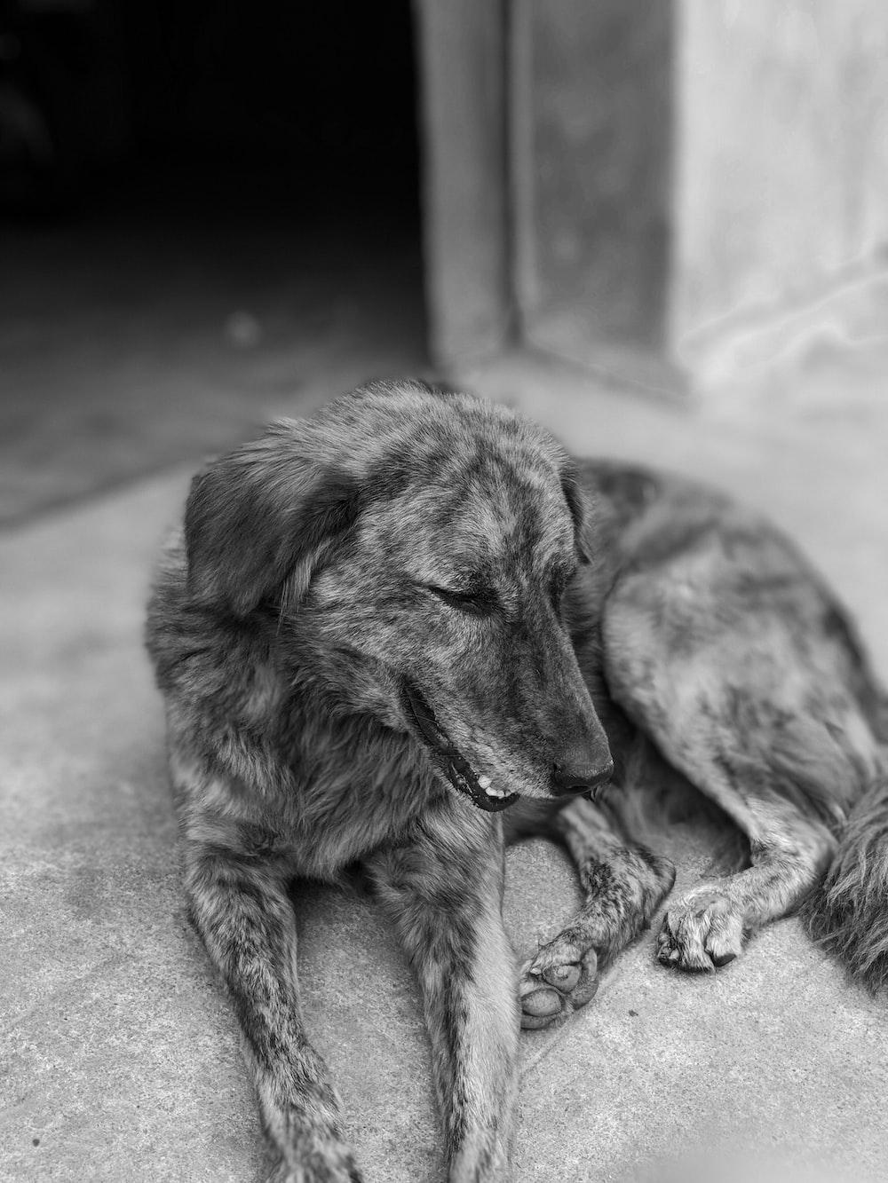 gray dog lying on ground