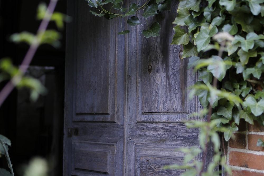 closed gray wood door