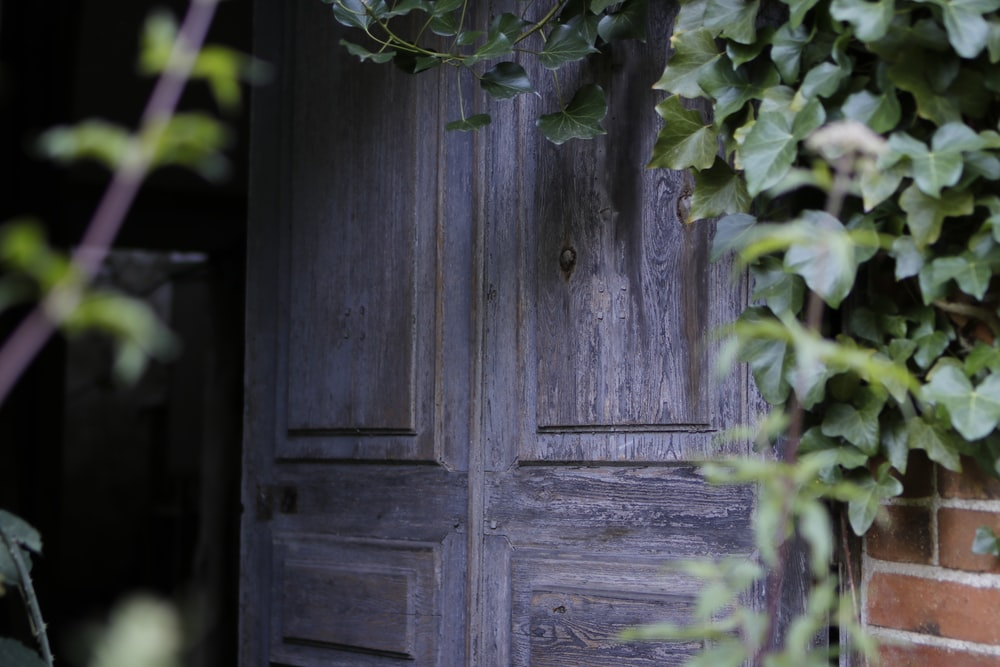 closed gray wood door