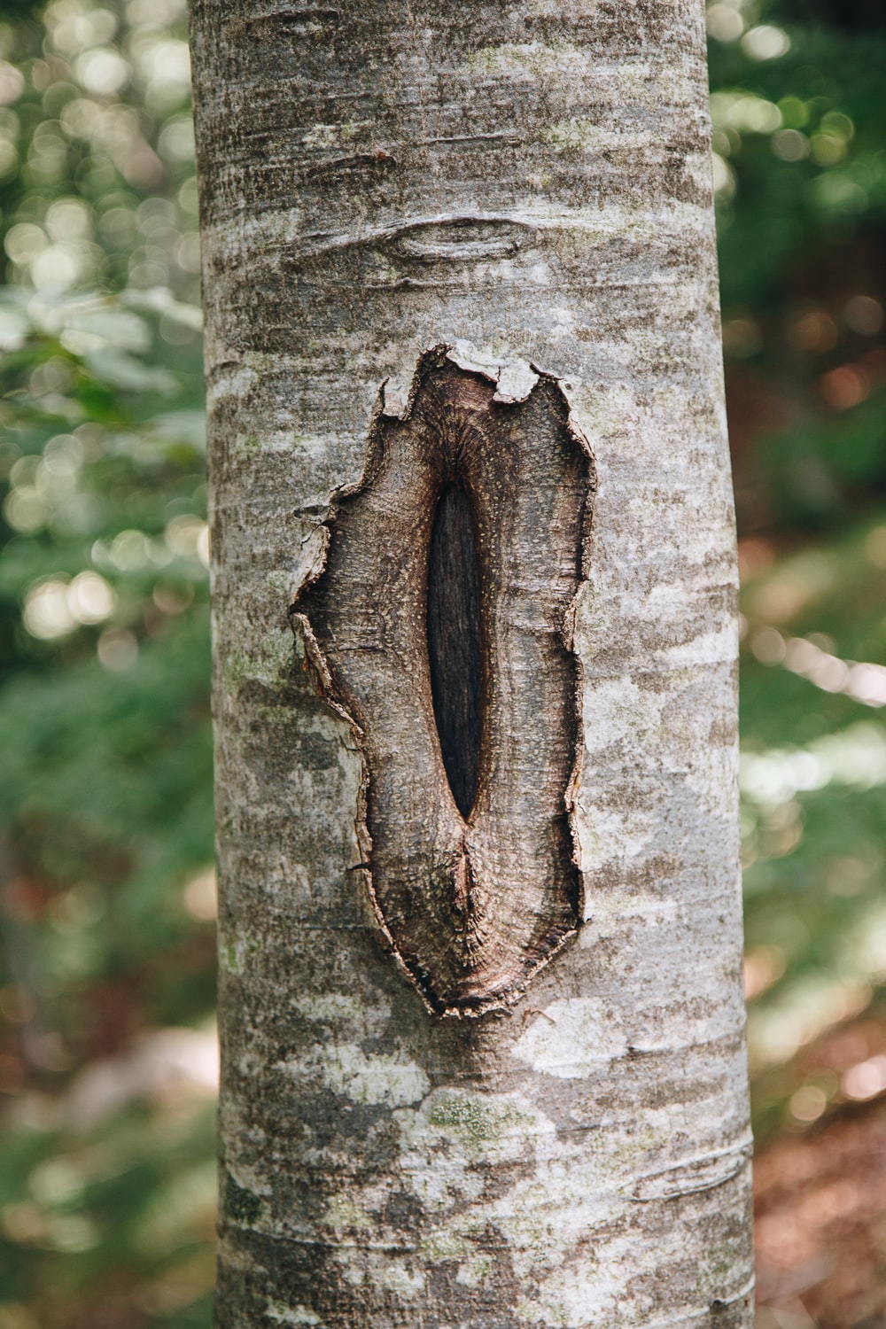 brown tree trunk with scar