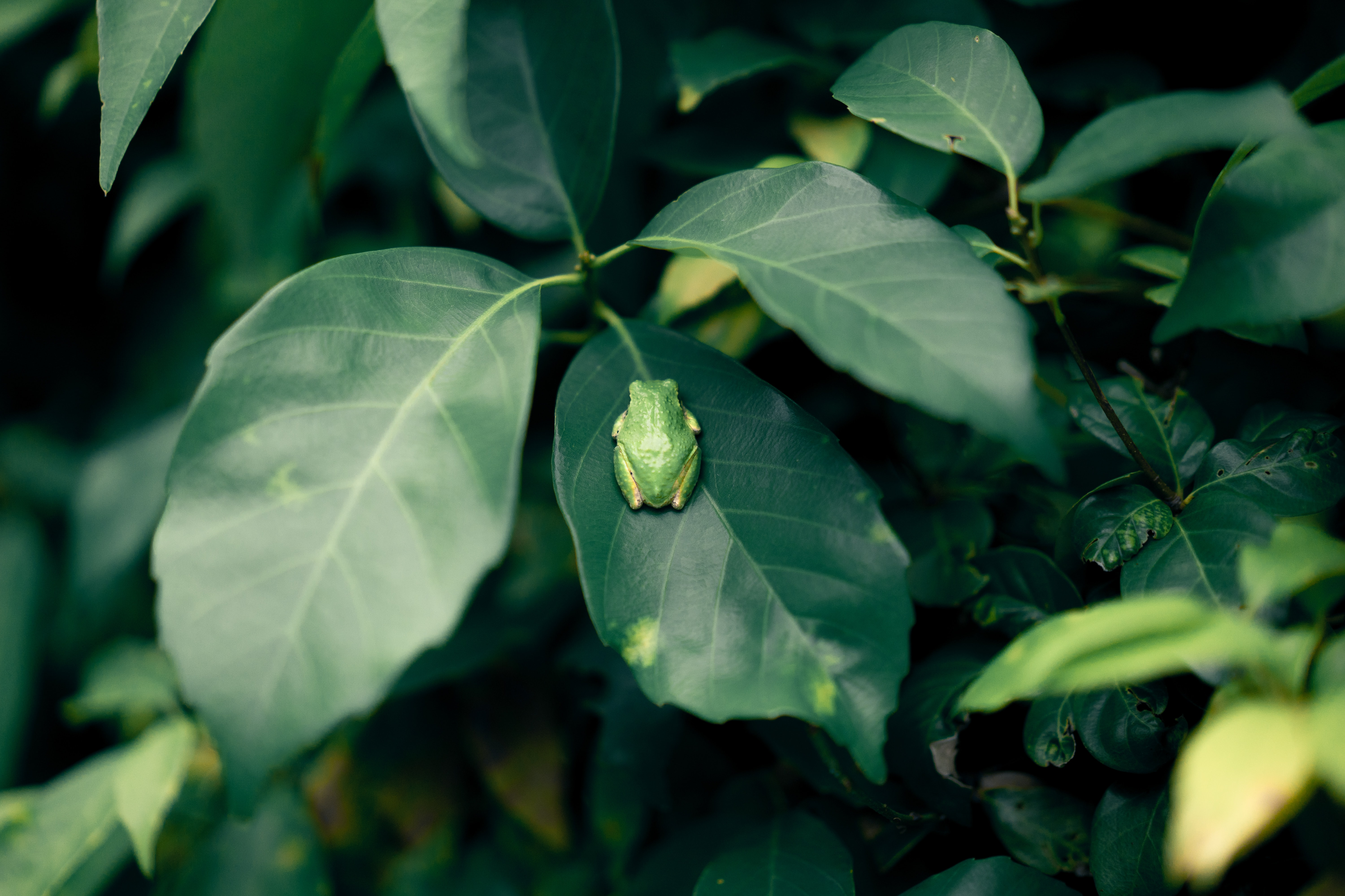 selective focus photography of green frog on leaf
