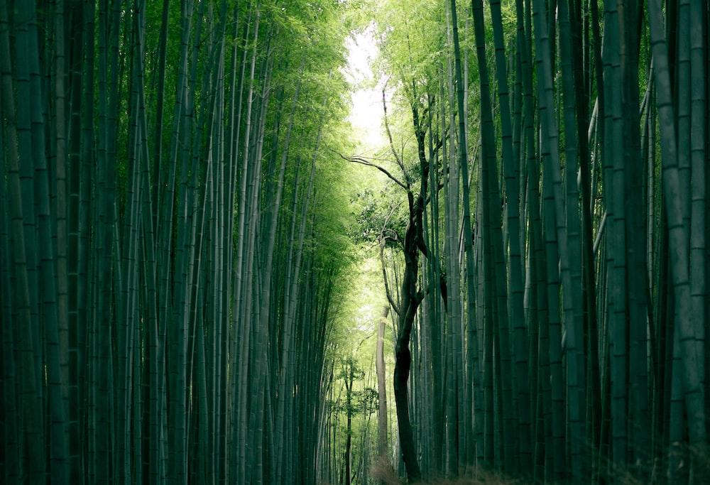 brown tree trunk between bamboo trees