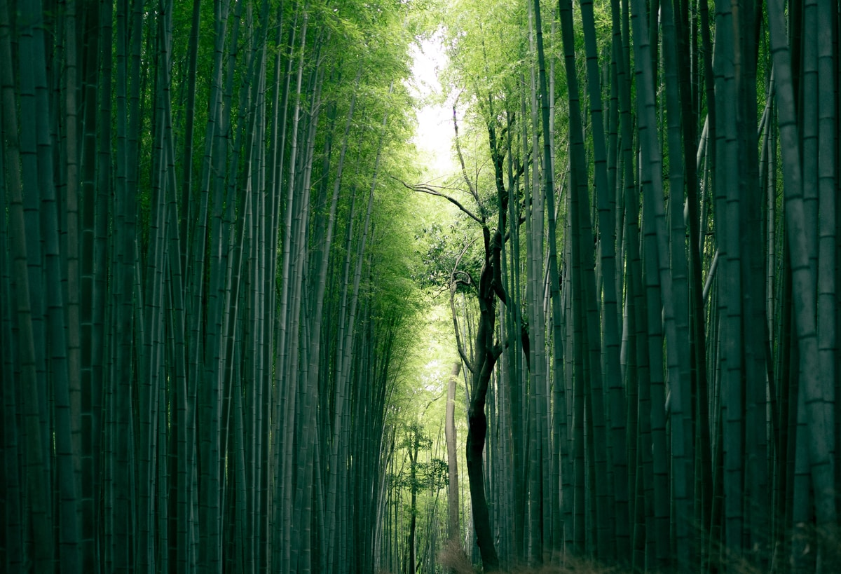 The bamboo forest in Arashiyama, just a 20 minute train ride from Kyoto.