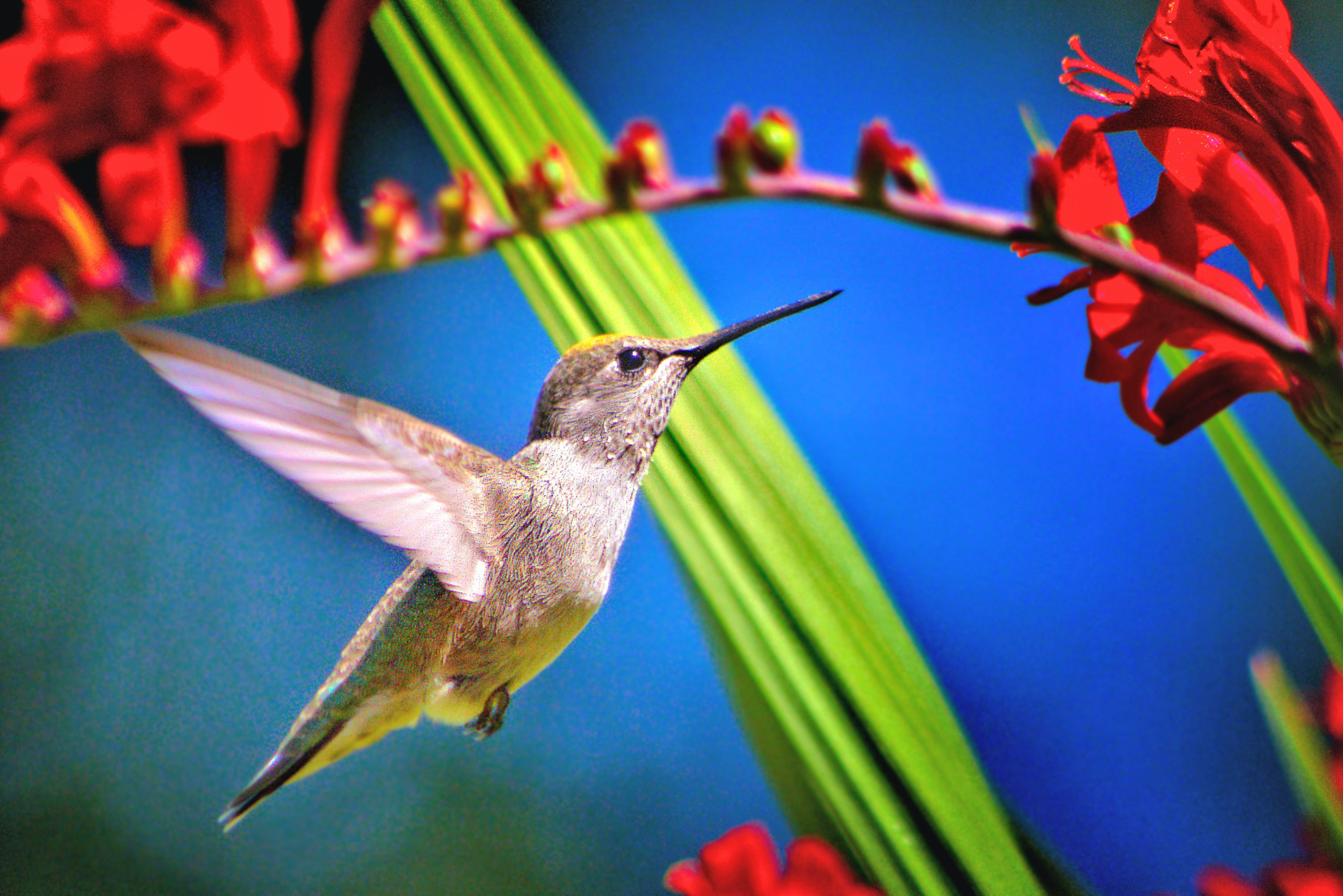 hummingbird near red petaled flower