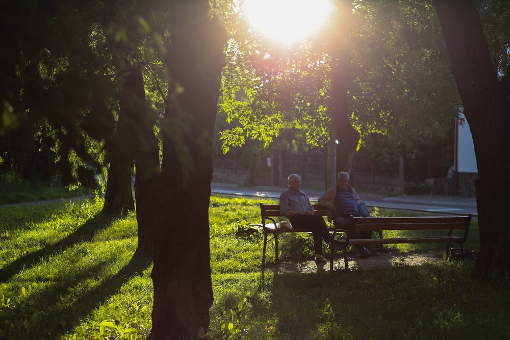 men sitting on bench under the tree
