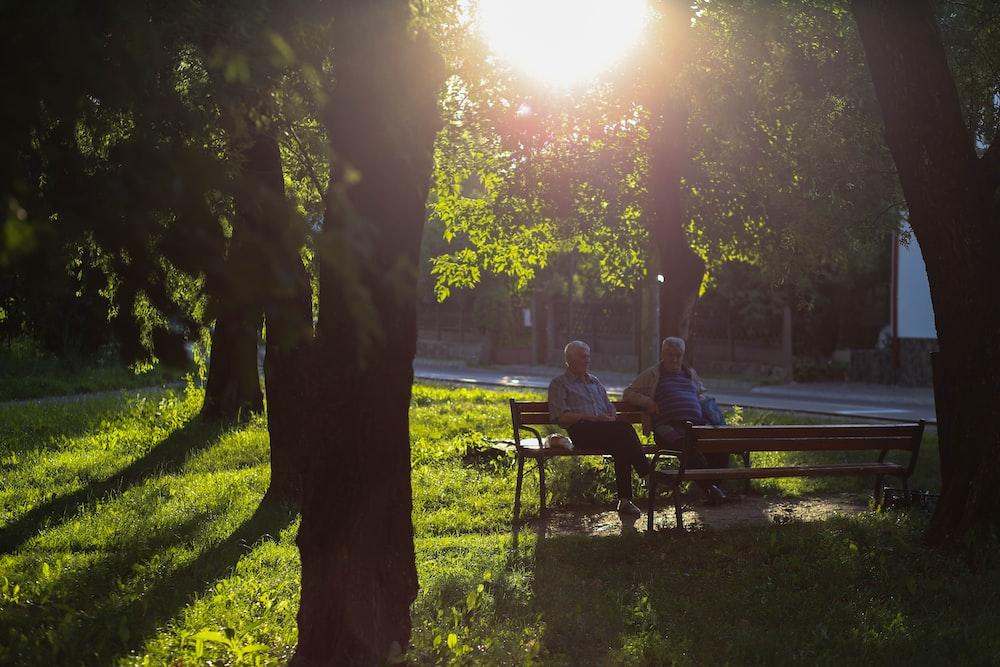 men sitting on bench under the tree