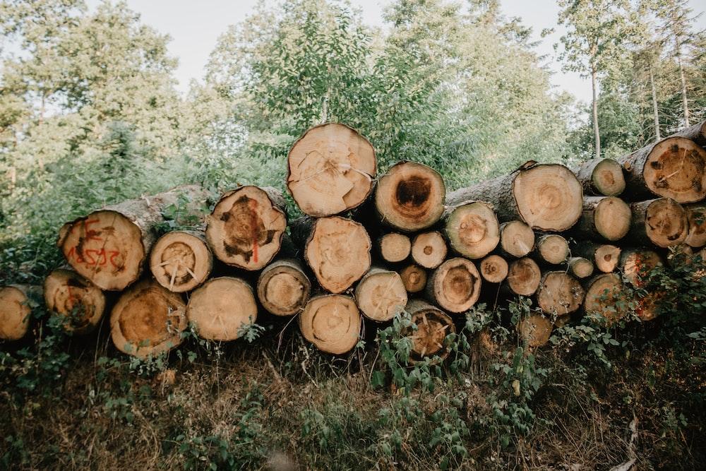 tree log