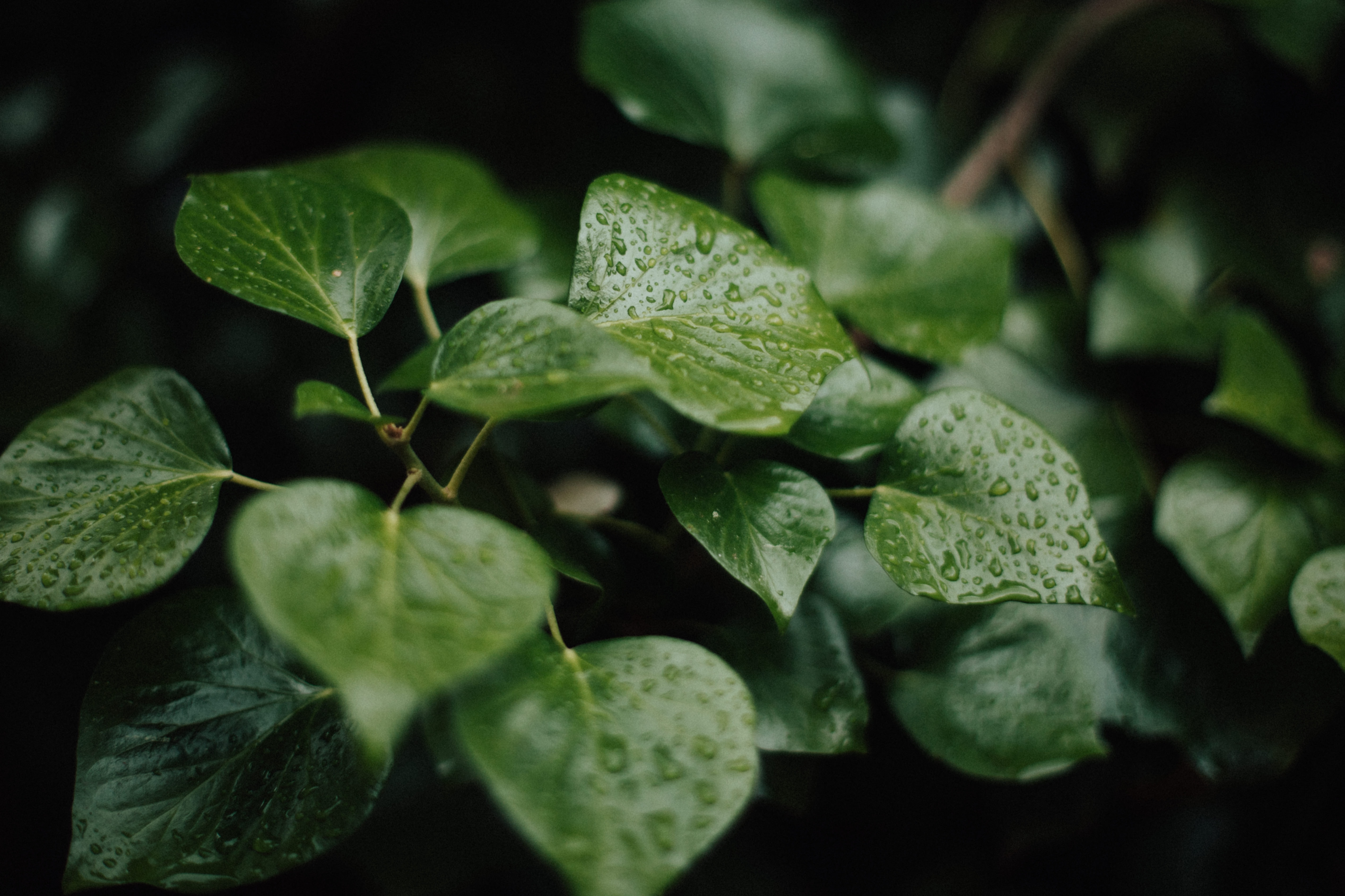 green leaves in macro photography