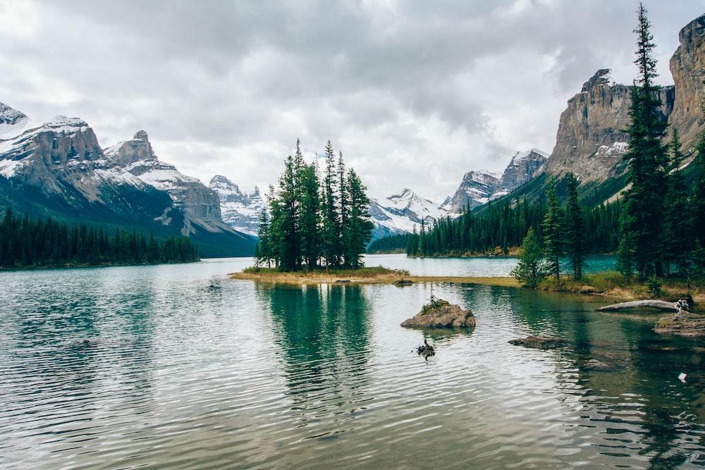 green pine tree line on lake during daytime