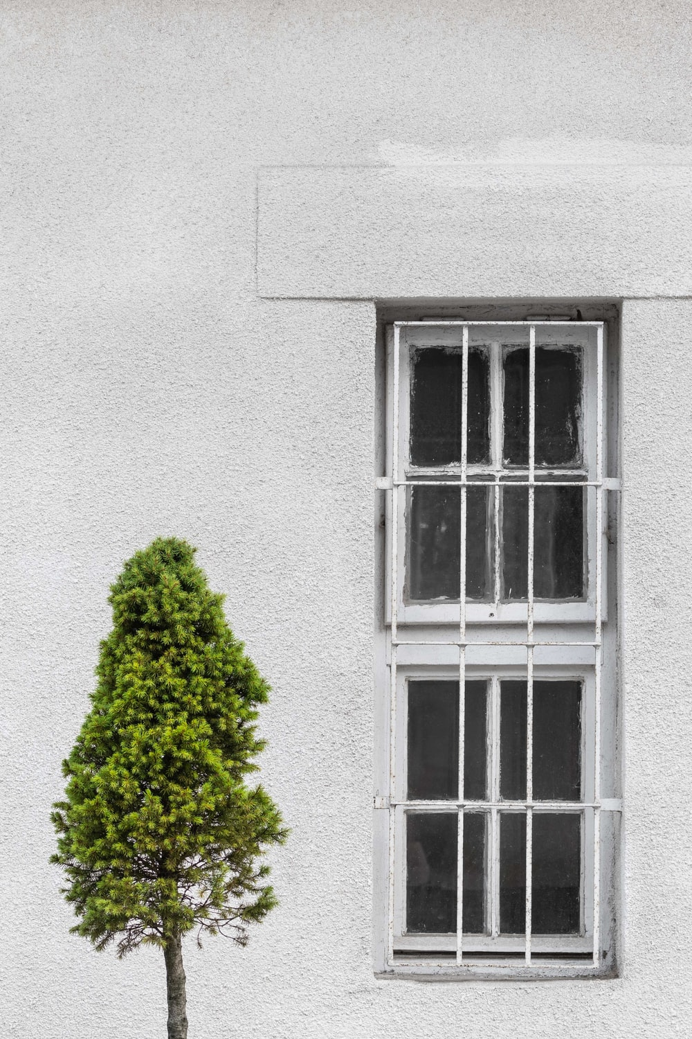 green leaf tree in front of grey concrete wall