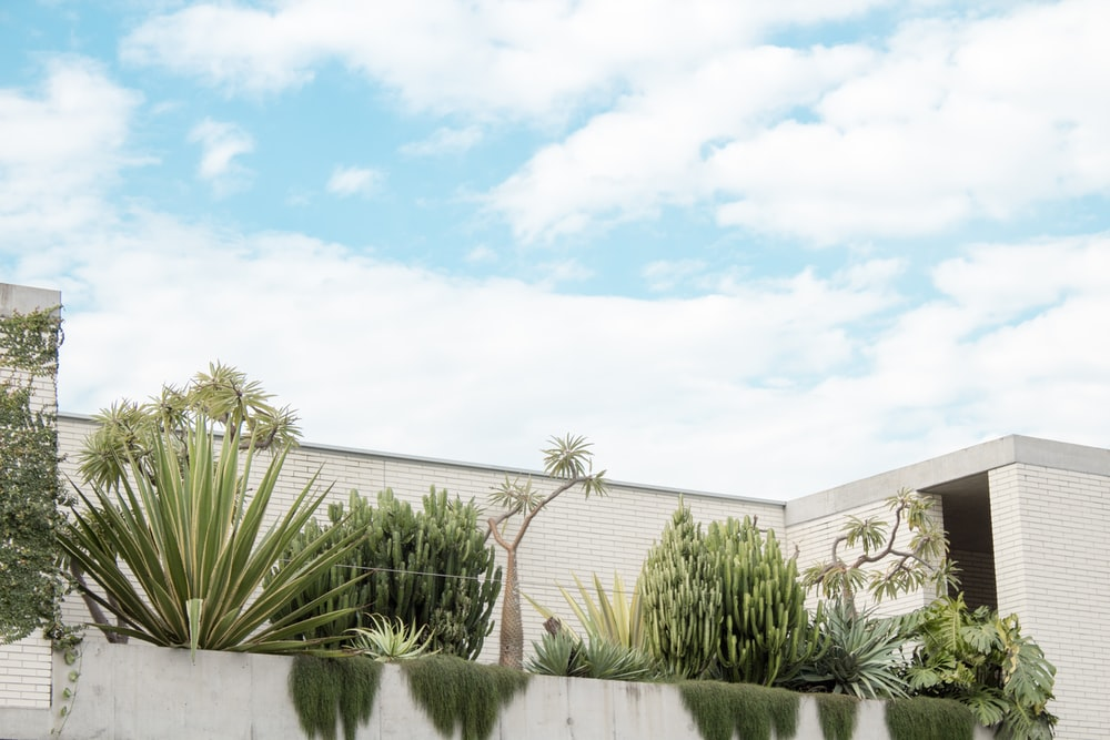 green plants near white wall under clear sky