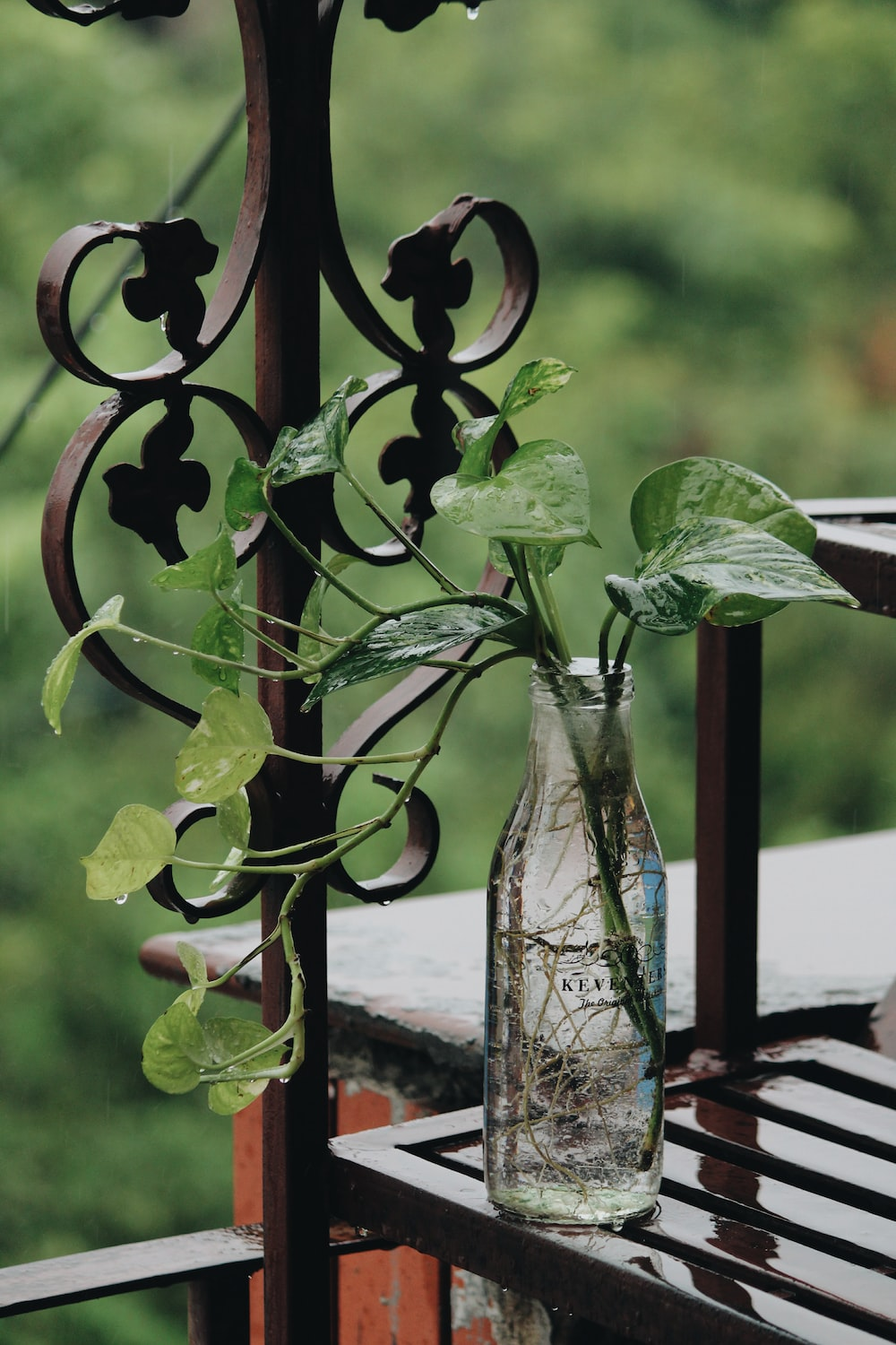 shallow focus photography green leafed potted plant