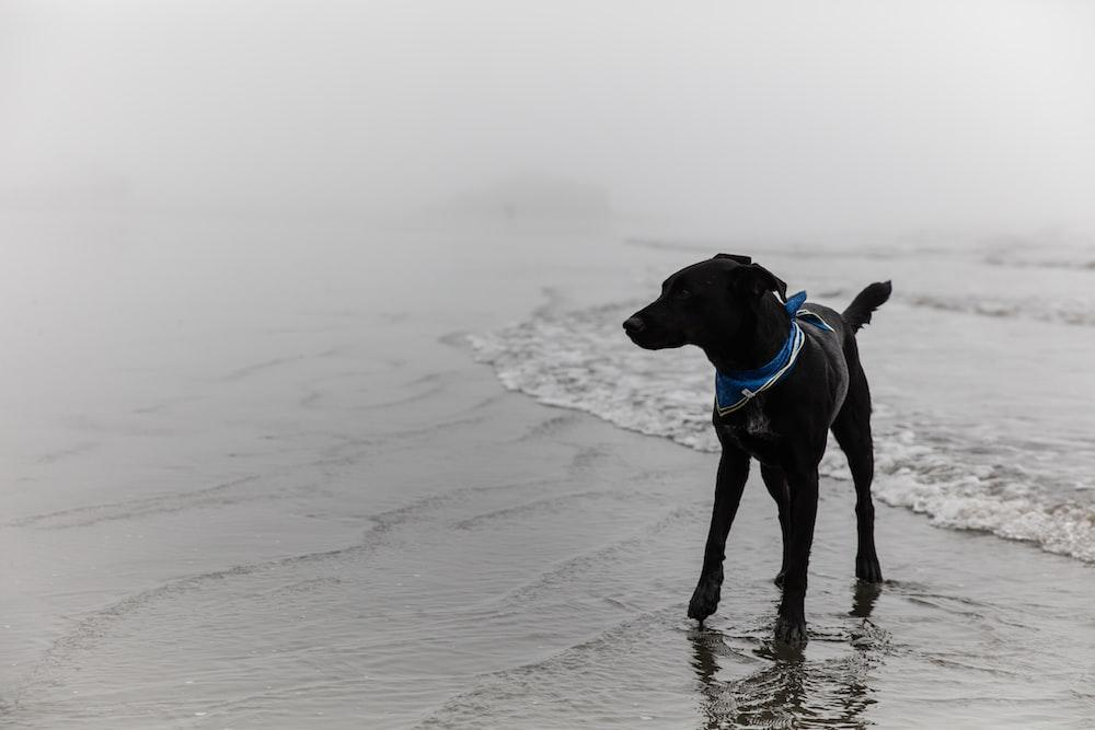 black short coated dog on beach