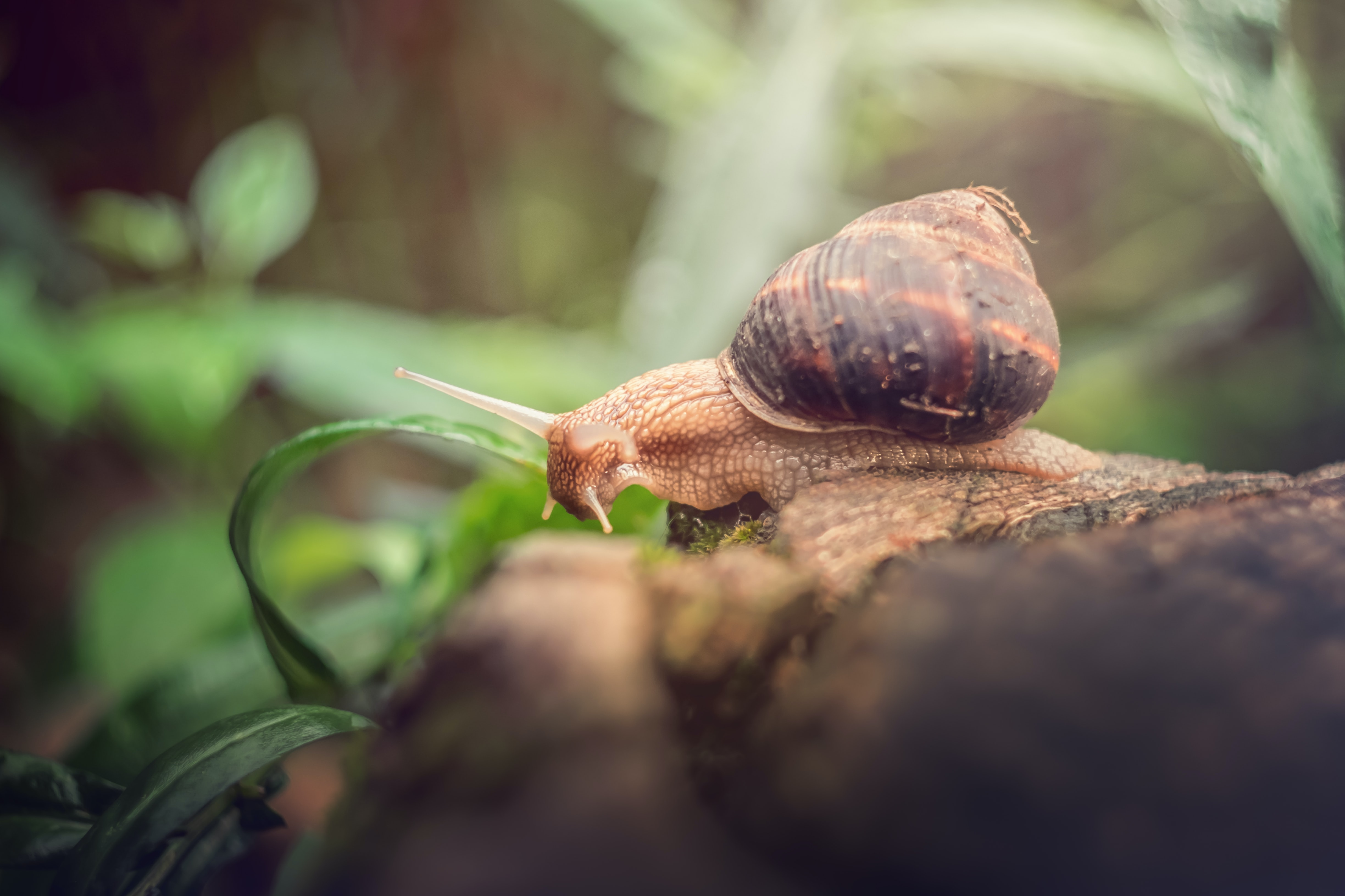 brown and black snail closeup photography