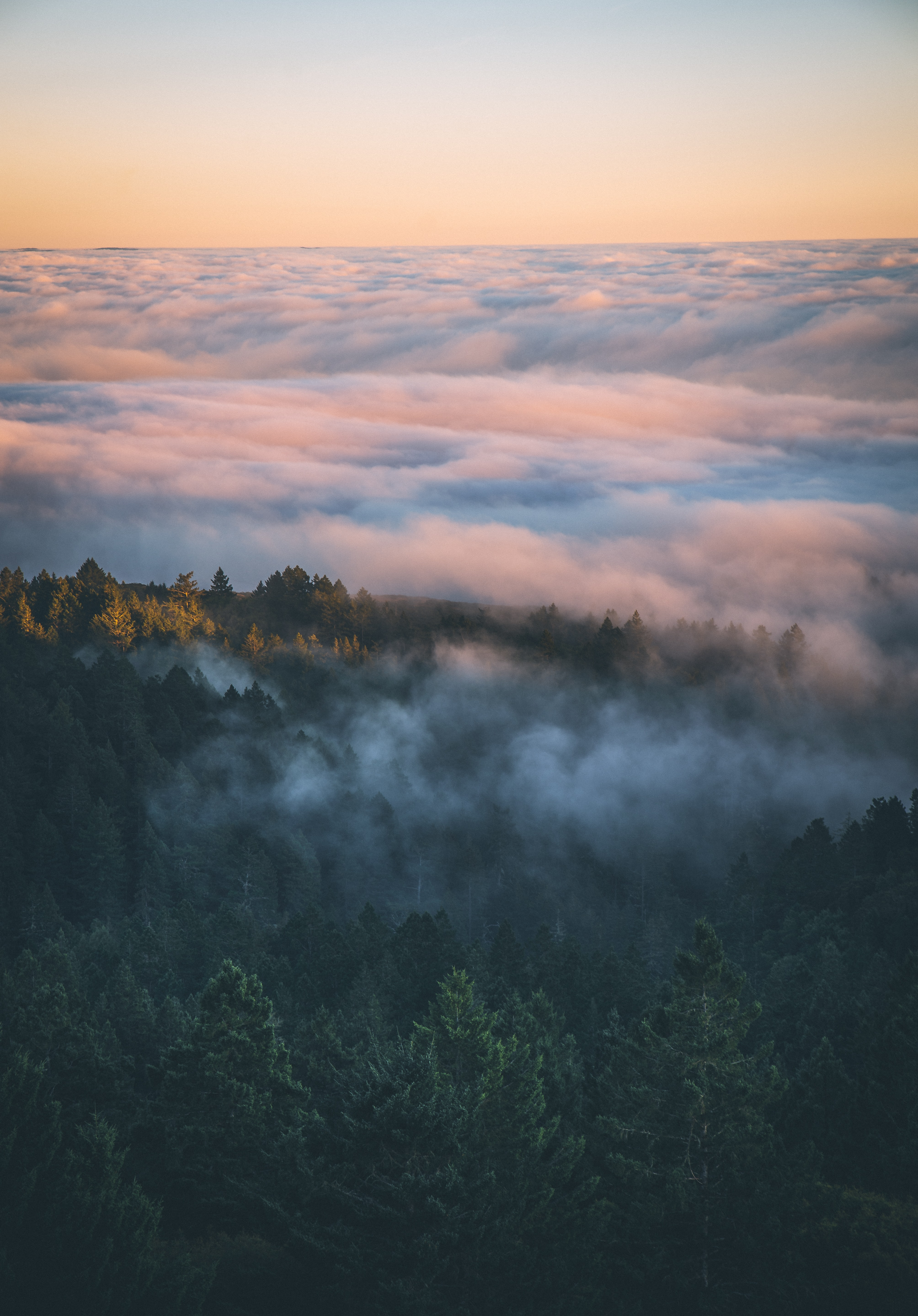 mountain covered with fog