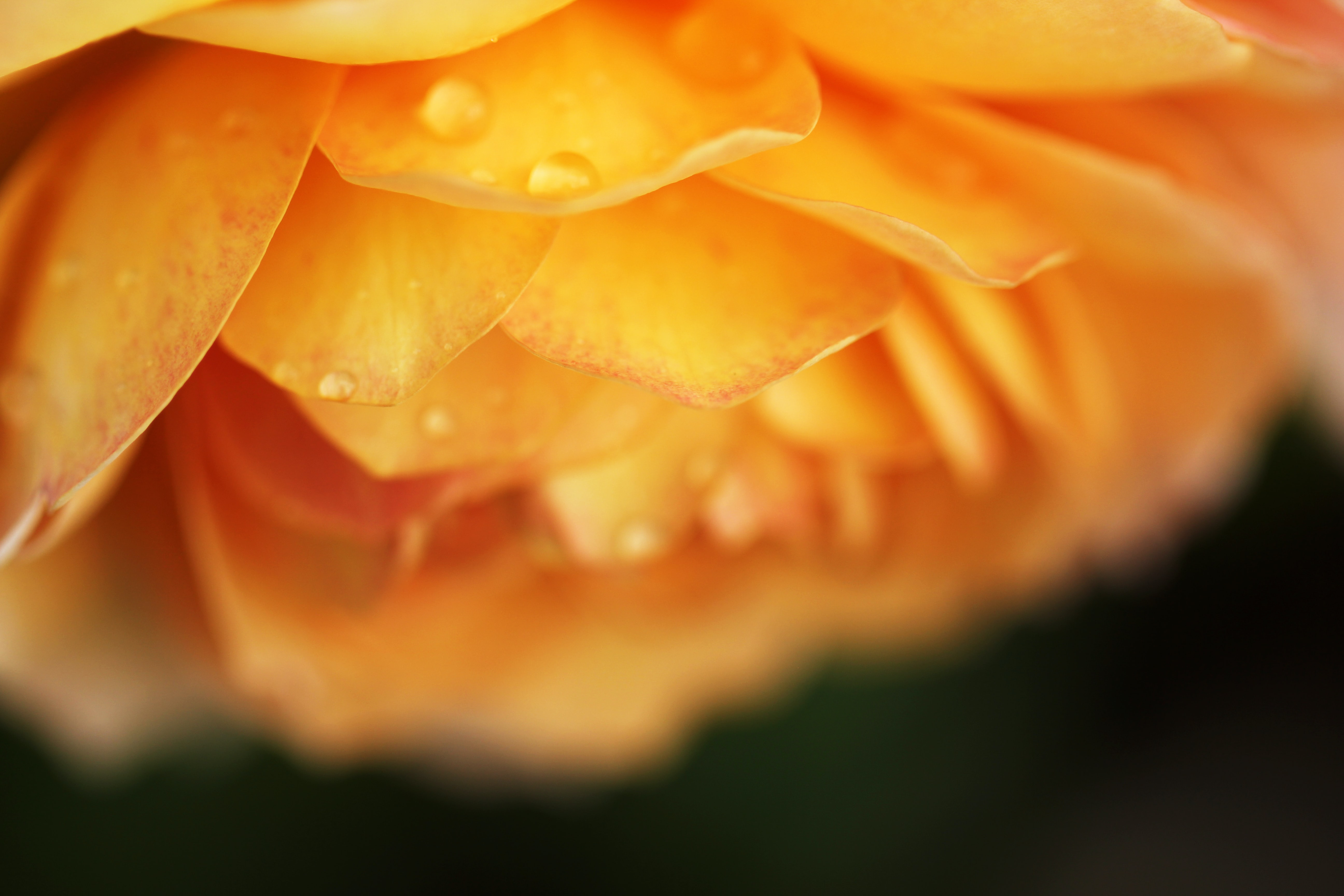 selective focus photography of orange cluster petaled flower