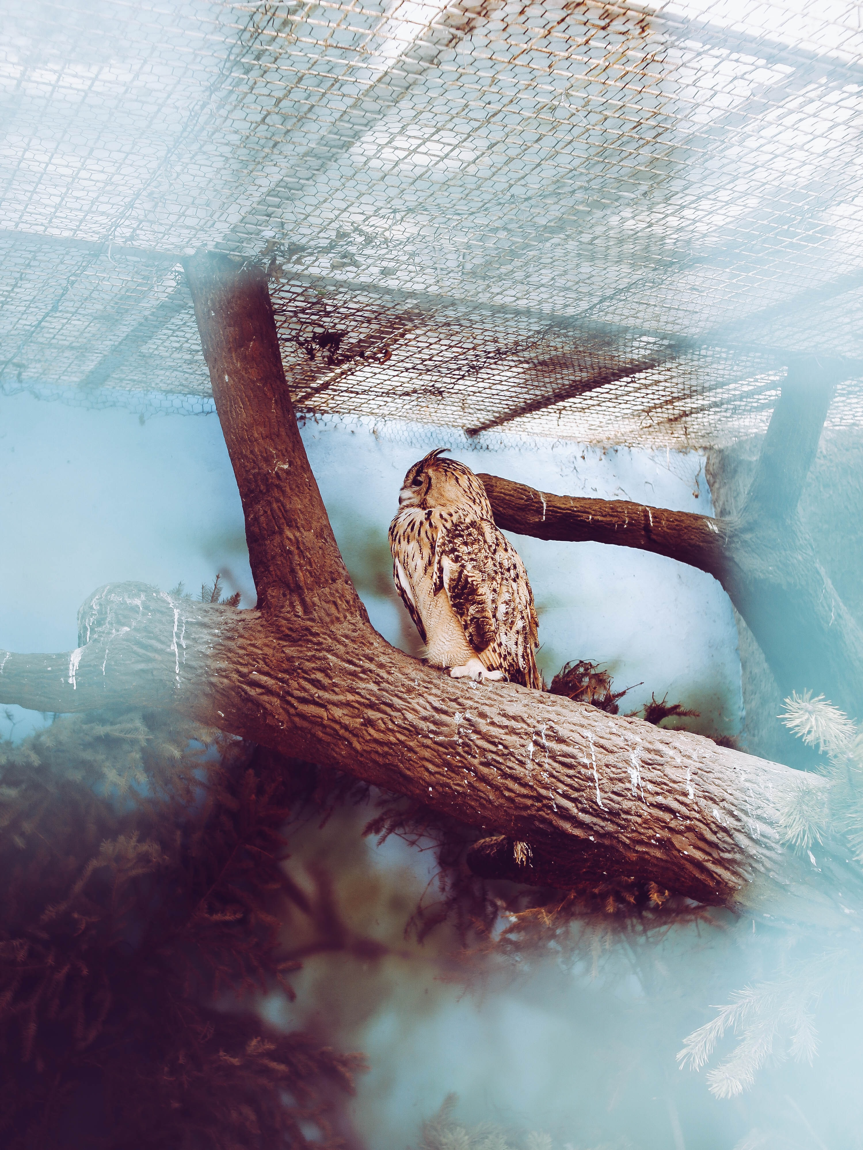 photography of owl on trunck