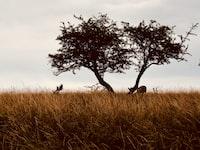 animal resting under tree in field