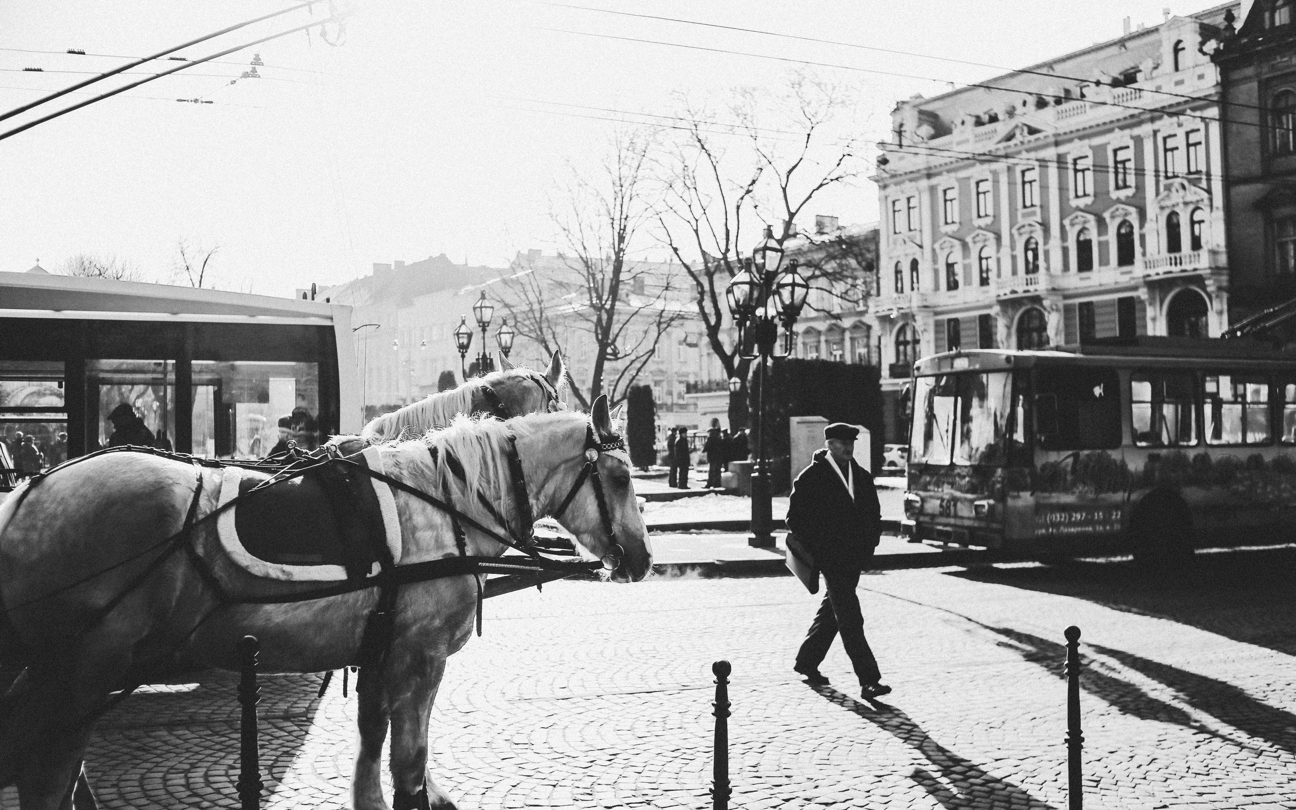 grayscale photography of man crossing street near horses