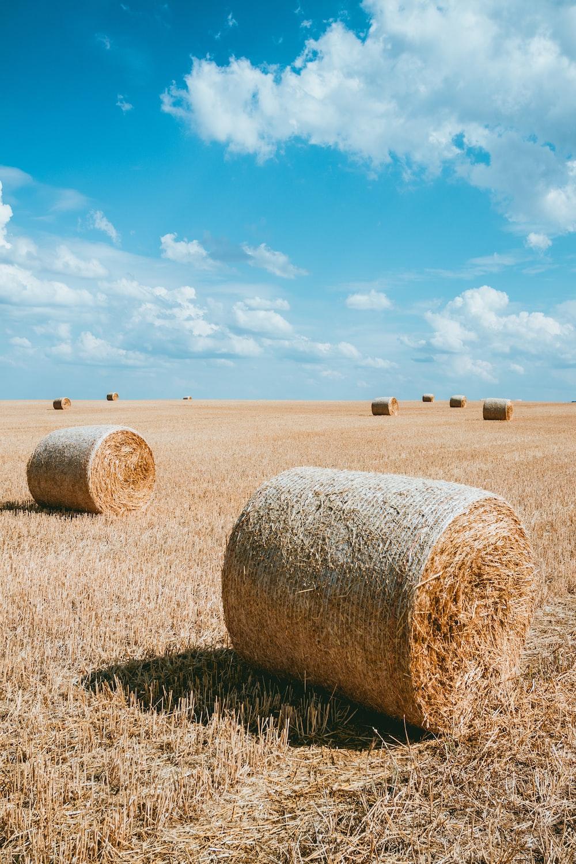 photography brown haystacks during daytime