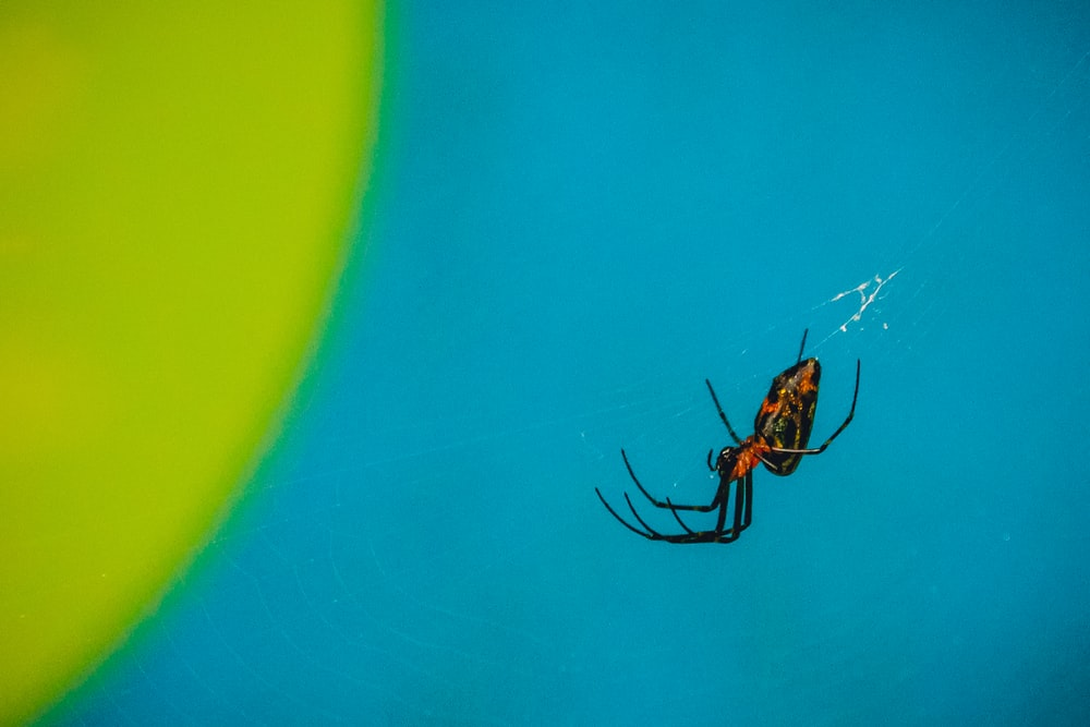 black and red spider in shallow focus photography