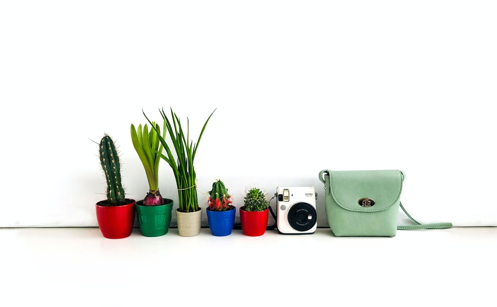 photography of potted plants beside instant camera and bag