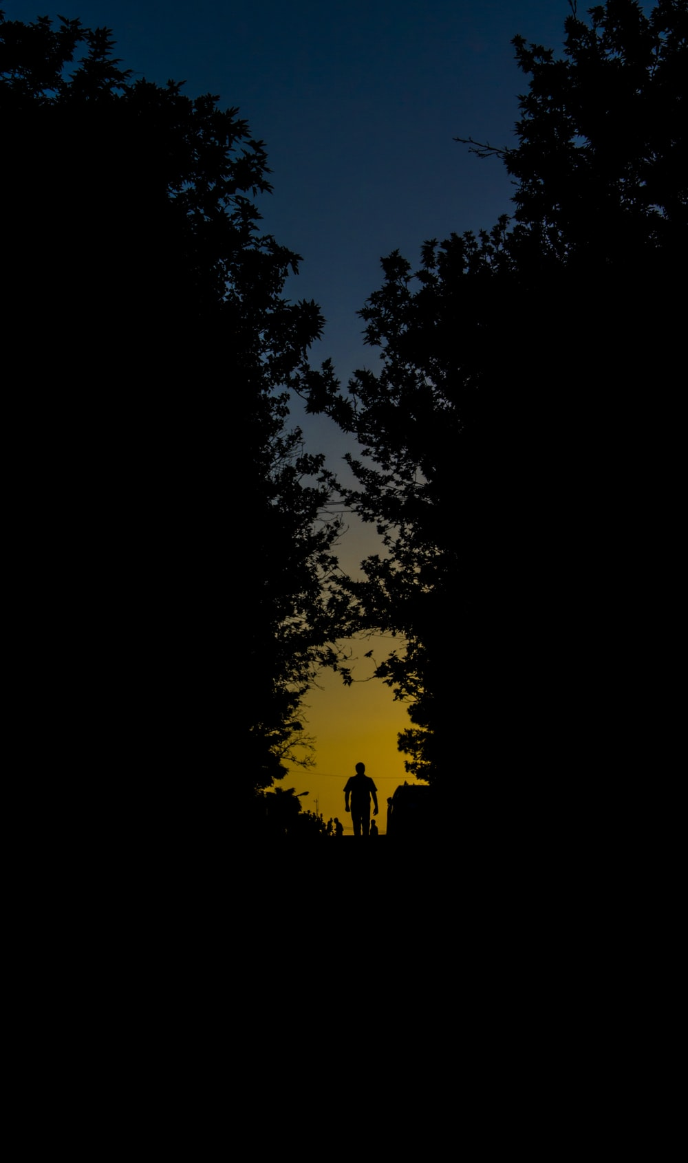 silhouette of person walking on forest