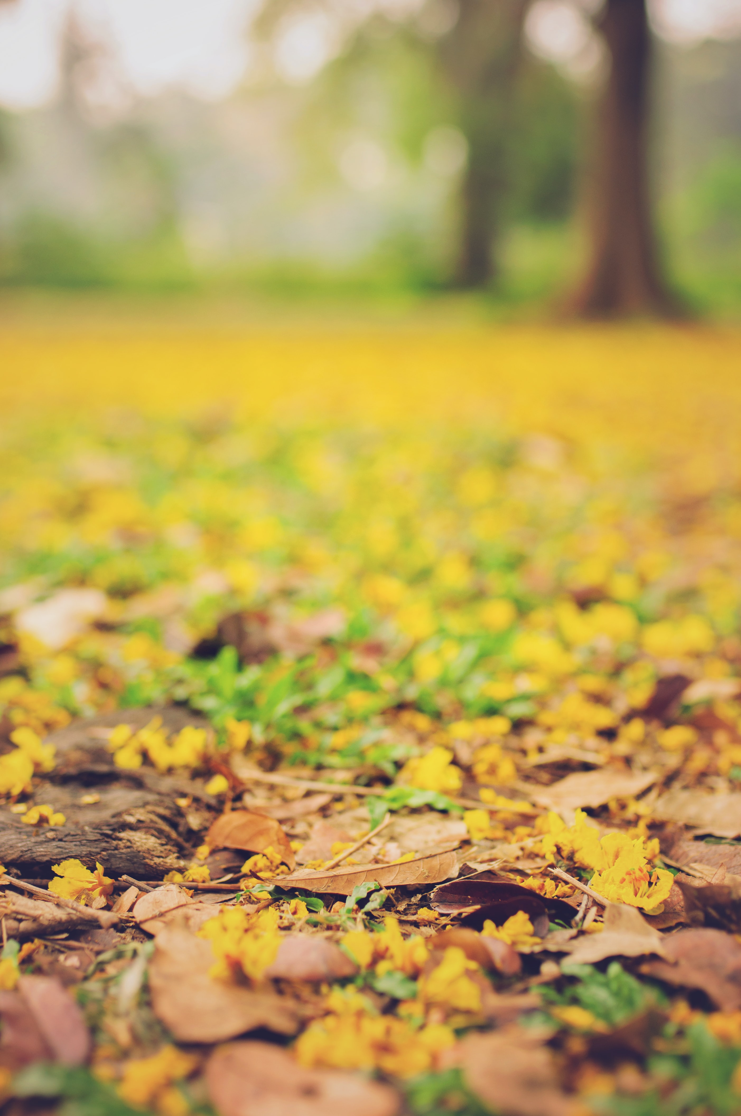 selective focus photography of leaves on the ground