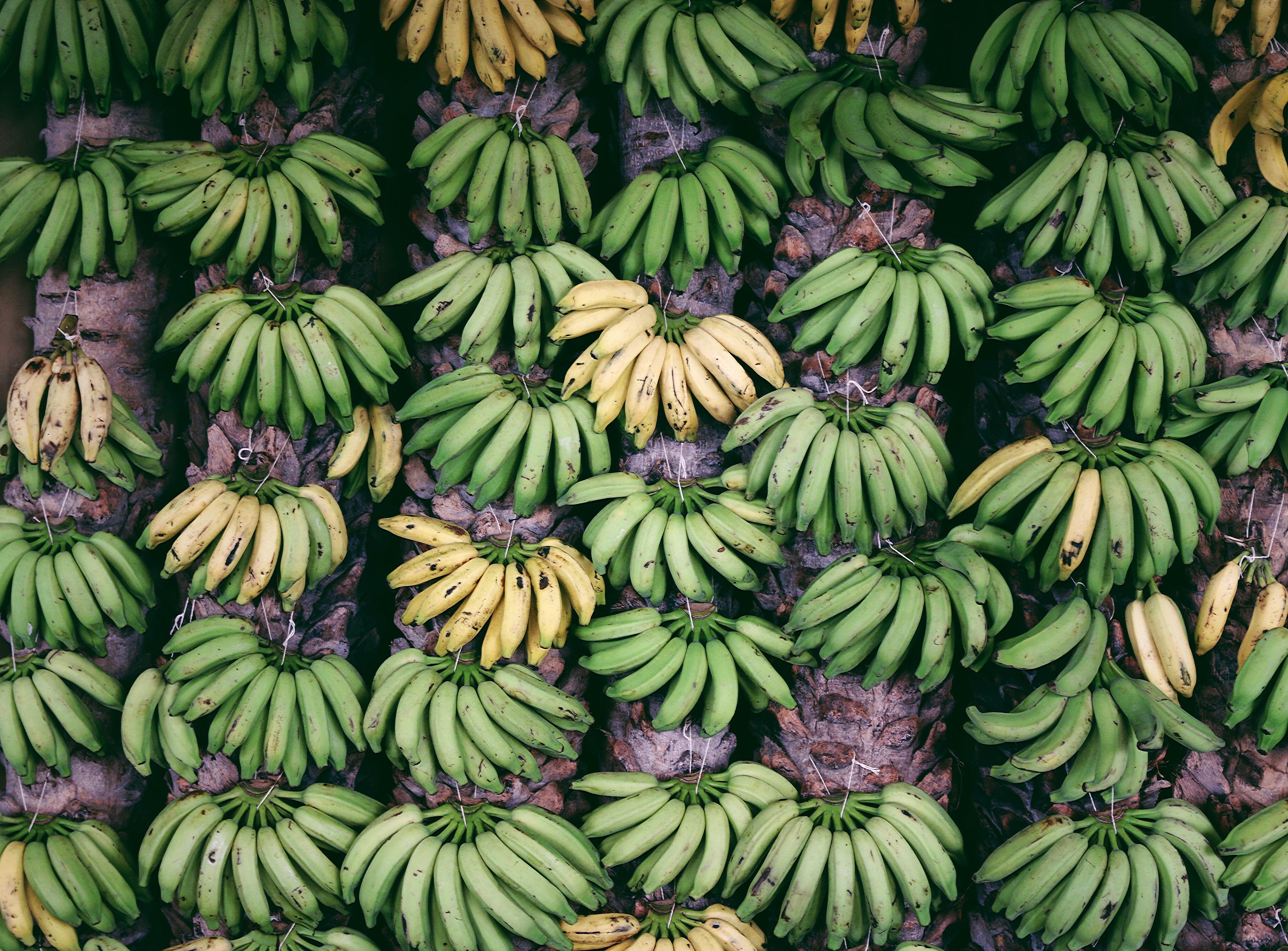 banana fruit lot