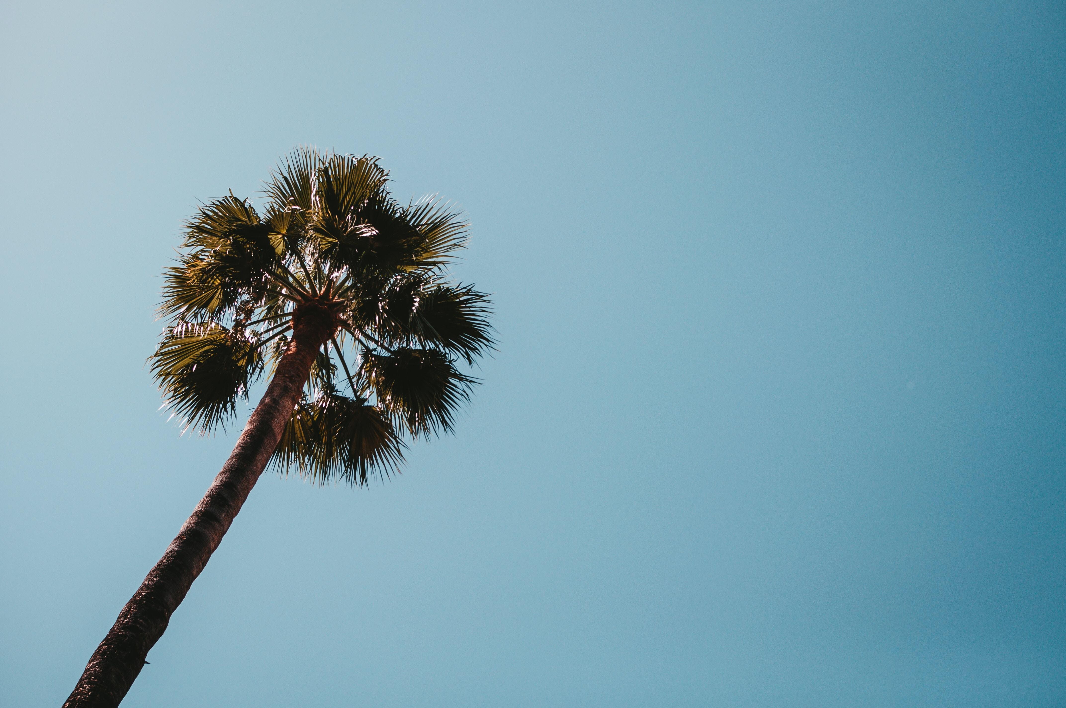 low angle photo of palm tree
