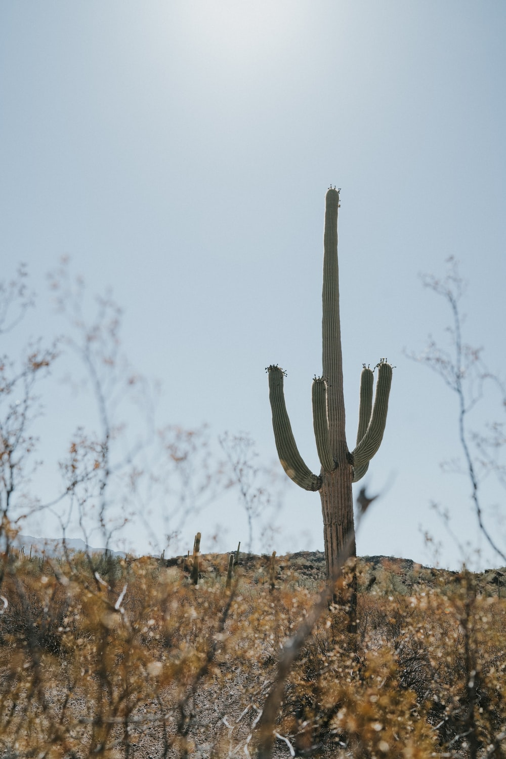 green cactus on field